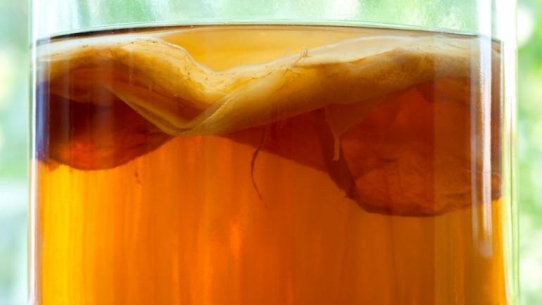 Чайный гриб - польза или вред?