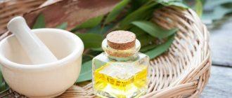 Масло эвкалипта - волшебный аромат, природного доктора