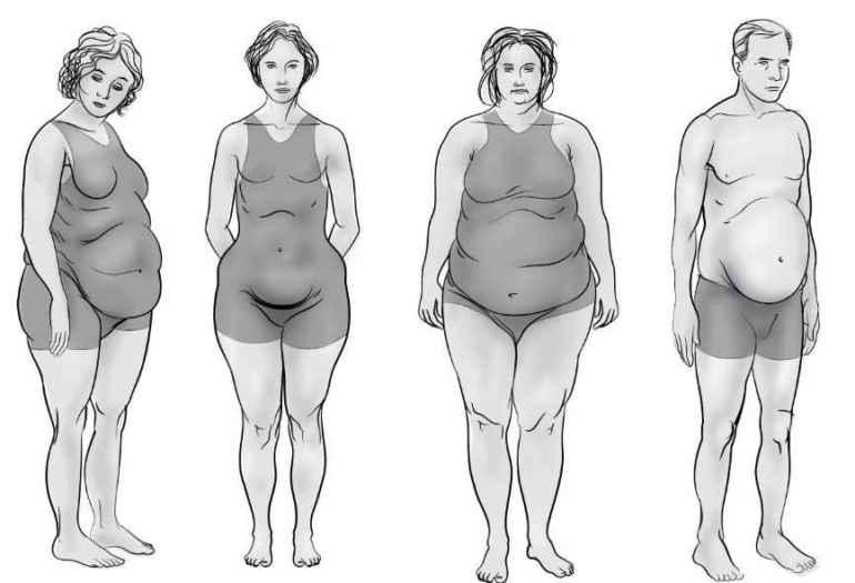 Почему с возрастом мышцы уходят, а жир только добавляется